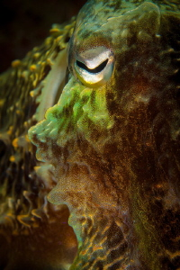 Cuttlefish face by Steven Miller